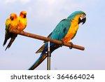 parrots animal pet colorful  | Shutterstock . vector #364664024