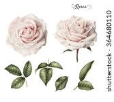 roses and leaves  watercolor ... | Shutterstock . vector #364680110