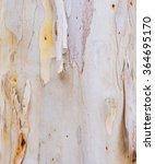 Image Of Eucalyptus Tree Bark...