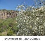 Small photo of Gran Canaria, Caldera de Bandama, white retama flowers