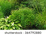 Different Green Bushes And...