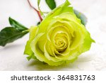 lying down yellow rose and rose | Shutterstock . vector #364831763