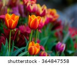 Orange Flowers With Blurred...