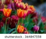 Orange Flowers With Blurred...