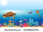 Sea Animals Swimming Under The...