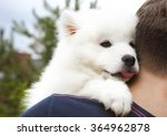 Stock photo boy holding funny samoyed puppy in the summer garden 364962878