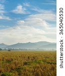 golden rice field and blue sky... | Shutterstock . vector #365040530