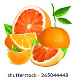 fresh citrus fruits.  fully... | Shutterstock .eps vector #365044448