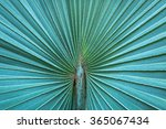 pattern of palm leaves. | Shutterstock . vector #365067434