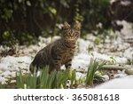 Cat  Snow  Looking  Garden ...