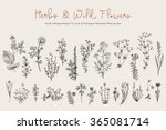 Stock vector herbs and wild flowers botany set vintage flowers black and white illustration in the style of 365081714
