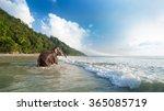 Bathing Elephant On The...