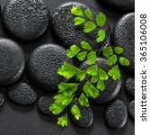 Small photo of beautiful spa concept of green twig Adiantum fern on zen basalt stones with dew, close up