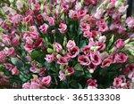 Bunch Of Eustoma Rosita Rose