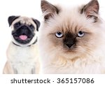 Stock photo angry cat and happy dog isolated on white 365157086