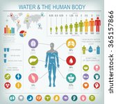 water and human body... | Shutterstock .eps vector #365157866
