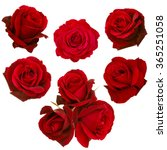 Collage Red Roses Isolated White - Fine Art prints