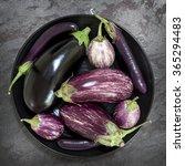 eggplant varieties in black... | Shutterstock . vector #365294483