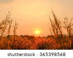golden sunset over grass field... | Shutterstock . vector #365398568