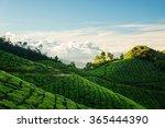 Green Tea Plantation Hills Wit...