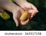 child holding bread in hands... | Shutterstock . vector #365517158