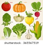 vegetables isolated mix | Shutterstock .eps vector #365567519