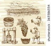vineyard  hand drawn collection | Shutterstock .eps vector #365586554