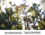 Abstract Swirl Of Trees