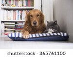 Stock photo a cat and a dog lying together 365761100