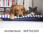 Stock photo a cat and a dog lying together 365761103