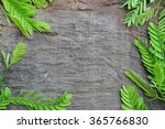 black wood texture with... | Shutterstock . vector #365766830