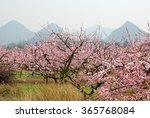Beautiful Blooming Peach Flower