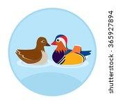 Couple Mandarin Duck