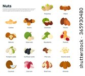 collection of different nuts... | Shutterstock .eps vector #365930480