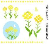 canola flower   vector eps10 | Shutterstock .eps vector #365969453
