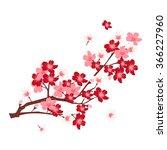 cherry spring flower background   Shutterstock .eps vector #366227960