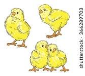 Vector Color Chickens...