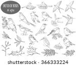 vector set of birds for your...