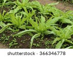 vegetable garden   Shutterstock . vector #366346778