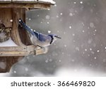 Blue Jay At Bird Feeder Winter...