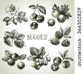 hand drawn sketch berries set.... | Shutterstock .eps vector #366502829