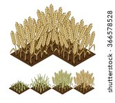 wheat isometric illustration.... | Shutterstock .eps vector #366578528
