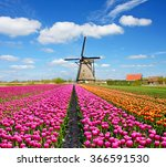 A Magical Landscape Of Tulips...