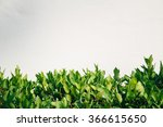 green leave background | Shutterstock . vector #366615650