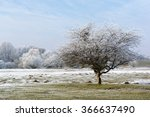 Frozen Solitary Tree On The...
