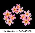 isolated pink flower frangipani ... | Shutterstock . vector #366645368