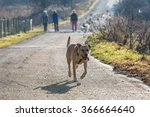 Stock photo brown mixed shelter dog 366664640