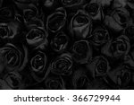 Black Roses Background With...
