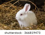 Stock photo pretty white rabbit on a dry grass straw 366819473