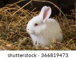 Stock photo pretty white rabbit on a dry grass straw 366819473